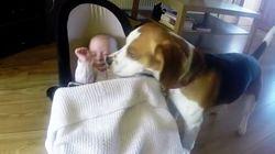 Cachorros cobrem bebês e se tornam a coisa mais bonita do