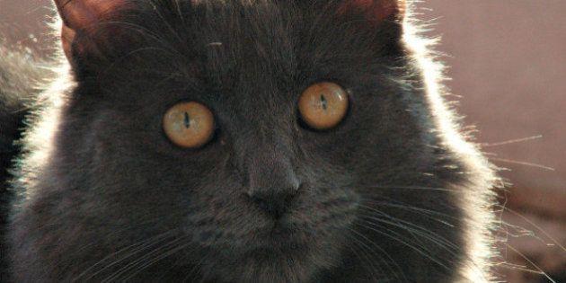 Gatos entendem (e copiam) as expressões dos