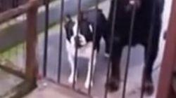 ASSISTA: 'HELLO!' Este cachorro cumprimenta todo mundo – mas