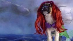 FO-FU-RA! Veja cachorros vestidos como personagens