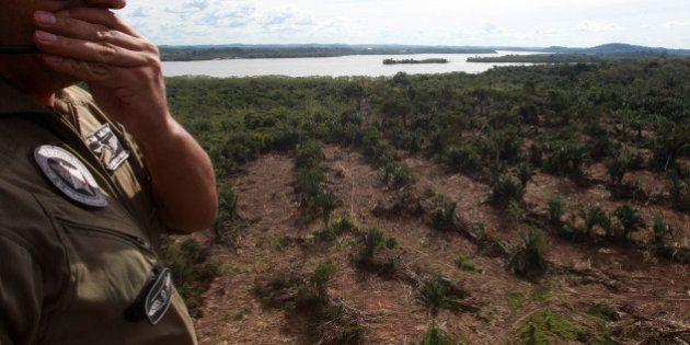 Desmatamento na Amazônia cai 18% entre agosto de 2013 e julho de 2014, segundo o