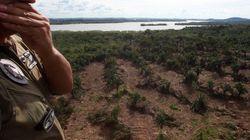 O governo garante: diminui o desmatamento na