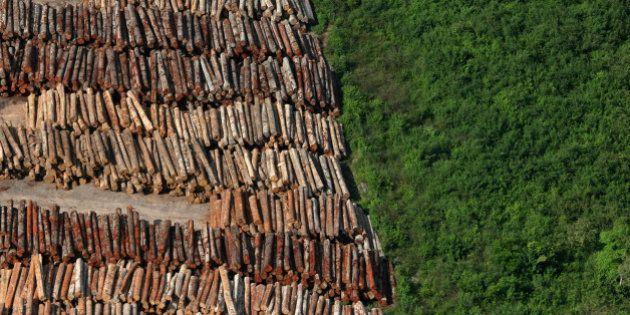 Desmatamento na Amazônia sobe 195% em março, diz