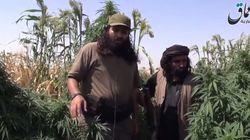ASSISTA: Estado Islâmico queima plantações de maconha na