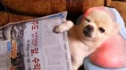 ASSISTA: você vai sentir inveja deste cachorro recebendo massagem na