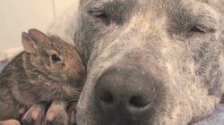 ASSISTA: Animais não se importam com