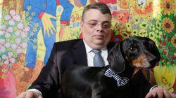 Dono de cão salsicha vai ao STJ e ganha guarda do animal após