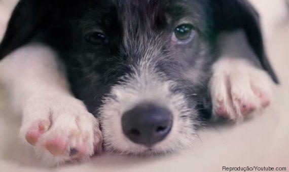ONG surpreende consumidores em pet shop ao trocar animais à venda por bichinhos para adoção