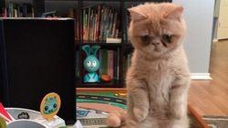Miau! Conheça George, o gato que A-DO-RA ficar em