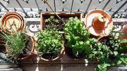 10 dicas para ter uma hortinha em casa ou no