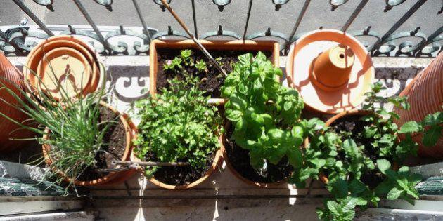 10 dicas para ter uma horta em casa ou no
