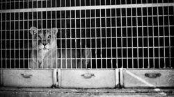 Goiás proíbe uso de animais em circos. E o Brasil deveria fazer o