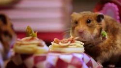 ASSISTA: O jantar de Dia dos Namorados mais fofo que você vai