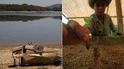 Conheça a alternativa mais barata e eficaz contra a crise da água: plantar