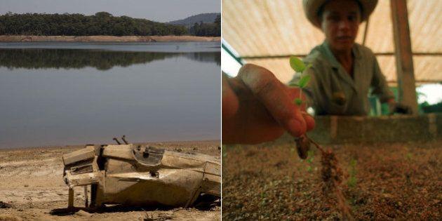 Crise da água em SP: Especialistas sugerem menos obras e mais políticas de reflorestamento para gestão...