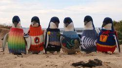 Estes pinguins têm uma história boa pra te contar. É sério