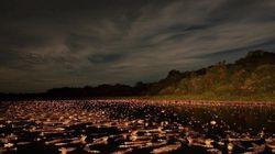 VOTE: brasileiro pode levar principal prêmio de fotografia da