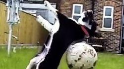 ASSISTA: Cães falham ao tentar brincar com seus