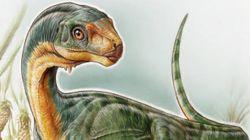 Menino de sete anos descobre nova espécie de dinossauro no