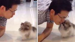 ASSISTA: Este cachorro não cansa de beijar o próprio