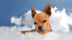 Os cachorros vão para o céu? O papa Francisco diz que