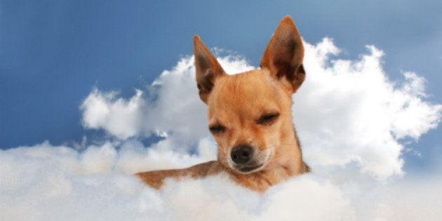 Os animais vão para o céu? O papa Francisco diz que