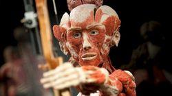 'Doutor da Morte' abre museu de cadáveres humanos na