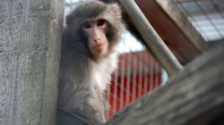 Recognise This Animal? Ikea Monkey Who Found Viral Fame Gets His Happily Ever