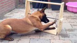 GENIAL! Veja como distrair seu cachorro enquanto você está fora de