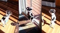 ASSISTA: Com as patas engessadas, cachorrinha reaprende a