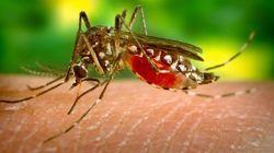 Descoberto anticorpo que neutraliza vírus da