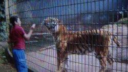 Menino atacado por tigre em zoo ganha prótese e poderá levar vida