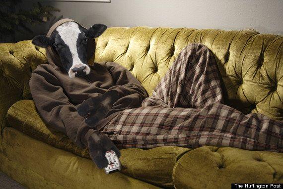 As vacas são a raiz de todo o mal, mas nós estamos com muita fome para nos