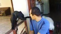 ASSISTA: Cachorro leva bronca e tenta se desculpar com o