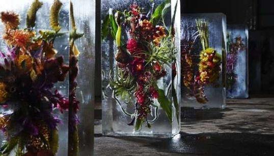 Isto é o que acontece quando você coloca flores em cubos gigantes de