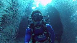 ASSISTA: Mergulhador nada por cardume gigantesco nas Ilhas