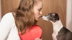 8 mitos sobre a castração de cães e