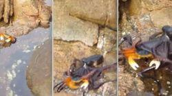 ASSISTA: Que lindo! Um caranguejo na pedr... SOCORRO! UM