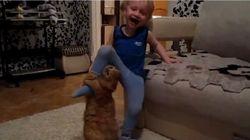 O que fazer quando gatos atacam seus filhos?