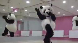 ASSISTA: Panda humano sensualiza em pole
