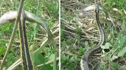 QUE SUSTO! Cobra rouba peixe de menino que estava