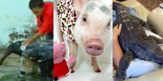 12 provas de que o amor dos seres humanos por animais não tem