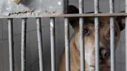 Empresas de segurança devem sacrificar 500 cães em São