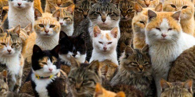 Conheça Aoshima, a 'Ilha dos Gatos' do Japão, onde a população felina é 6x maior do que a