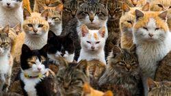 Conheça a ilha onde a população felina é 6x maior do que a