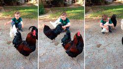 ASSISTA: Menino abraça galinha e ganha 'beijo' em