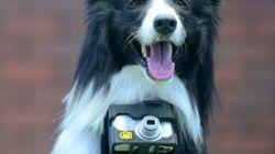 Nikon cria aparelho que transforma cachorros em