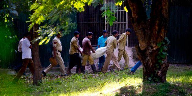 Homem é atacado e morto após invadir recinto de tigre branco em zoológico na Índia