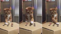 ASSISTA: Gato fofíssimo fica confuso com esta caixa de papelão