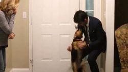 ASSISTA: Esta cadela ficou eufórica ao ver seu dono chegar em